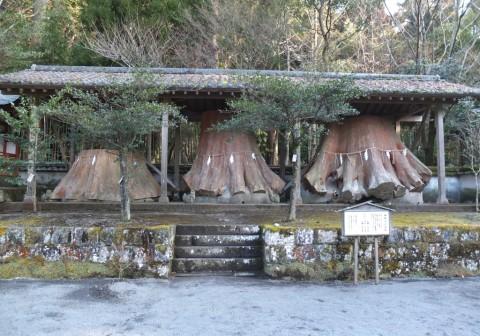 御神木の切株(平成3年、台風19号により倒伏。樹高最高55m、樹齢最高600年。)